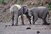 Elephant_Jousting_Mashatu_2019_Botswana_0010