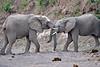 Elephant_Jousting_Mashatu_2019_Botswana_0015