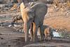 Elephant_Mother_Baby_Mashatu_2019_Botswana_0013