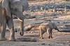 Elephant_Mother_Baby_Mashatu_2019_Botswana_0007