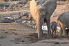 Elephant_Mother_Baby_Mashatu_2019_Botswana_0010