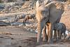 Elephant_Mother_Baby_Mashatu_2019_Botswana_0011