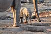 Elephant_Mother_Baby_Mashatu_2019_Botswana_0002