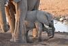 Elephant_Mother_Baby_Mashatu_2019_Botswana_0019