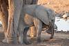 Elephant_Mother_Baby_Mashatu_2019_Botswana_0018