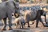 Elephant_Mother_Baby_Mashatu_2019_Botswana_0003