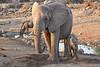 Elephant_Mother_Baby_Mashatu_2019_Botswana_0012