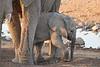 Elephant_Mother_Baby_Mashatu_2019_Botswana_0014