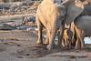 Elephant_Mother_Baby_Mashatu_2019_Botswana_0009