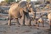 Elephant_Mother_Baby_Mashatu_2019_Botswana_0008