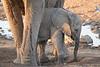 Elephant_Mother_Baby_Mashatu_2019_Botswana_0016