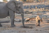 Elephant_Mother_Baby_Mashatu_2019_Botswana_0006