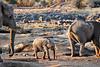 Elephant_Mother_Baby_Mashatu_2019_Botswana_0004