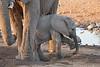 Elephant_Mother_Baby_Mashatu_2019_Botswana_0020