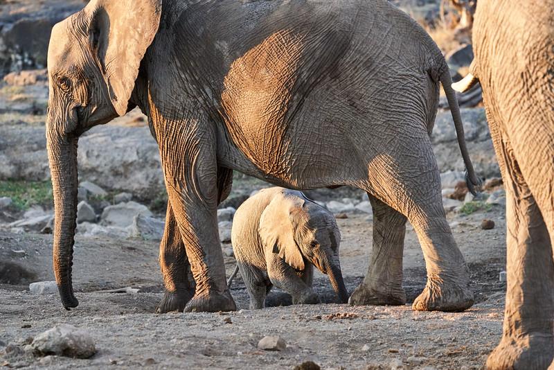 Elephant_Mother_Baby_Mashatu_2019_Botswana_0001