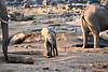 Elephant_Mother_Baby_Mashatu_2019_Botswana_0005