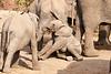 Elephant_Sitting_Up_Mashatu_2019_Botswana_0004