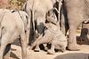 Elephant_Sitting_Up_Mashatu_2019_Botswana_0009