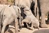 Elephant_Sitting_Up_Mashatu_2019_Botswana_0006