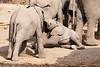 Elephant_Sitting_Up_Mashatu_2019_Botswana_0002