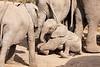 Elephant_Sitting_Up_Mashatu_2019_Botswana_0012