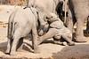 Elephant_Sitting_Up_Mashatu_2019_Botswana_0003