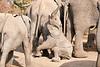 Elephant_Sitting_Up_Mashatu_2019_Botswana_0007