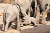 Elephant_Sitting_Up_Mashatu_2019_Botswana_0001