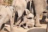 Elephant_Sitting_Up_Mashatu_2019_Botswana_0010