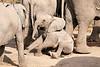Elephant_Sitting_Up_Mashatu_2019_Botswana_0011