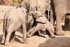 Elephant_Sitting_Up_Mashatu_2019_Botswana_0005
