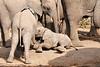 Elephant_Sitting_Up_Mashatu_2019_Botswana_0014