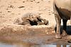 Elephant_Yoga_Mashatu_2019_Botswana_0025