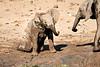Elephant_Yoga_Mashatu_2019_Botswana_0019