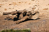 Elephant_Yoga_Mashatu_2019_Botswana_0014