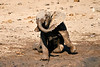 Elephant_Yoga_Mashatu_2019_Botswana_0017