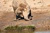 Elephant_Yoga_Mashatu_2019_Botswana_0010