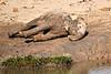 Elephant_Yoga_Mashatu_2019_Botswana_0015