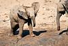 Elephant_Yoga_Mashatu_2019_Botswana_0020