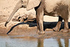 Elephant_Yoga_Mashatu_2019_Botswana_0023