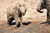 Elephant_Yoga_Mashatu_2019_Botswana_0021