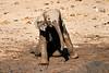 Elephant_Yoga_Mashatu_2019_Botswana_0018