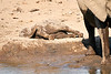 Elephant_Yoga_Mashatu_2019_Botswana_0024