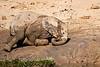Elephant_Yoga_Mashatu_2019_Botswana_0013