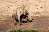 Elephant_Yoga_Mashatu_2019_Botswana_0011