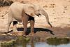 Elephants_Mashatu_2019_Botswana_0105