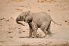 Elephants_Mashatu_2019_Botswana_0136