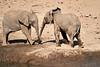 Elephants_Mashatu_2019_Botswana_0134