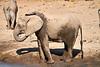 Elephants_Mashatu_2019_Botswana_0118