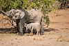 Elephants_Mashatu_2019_Botswana_0140